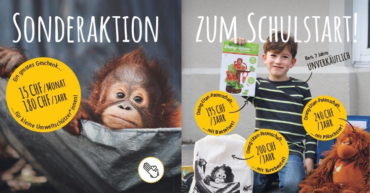Sonderaktion zum Schulstart: Schenken Sie einem Kind eine Orang-Utan-Patenschaft