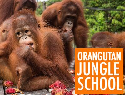 OrangUtanJungleSchool