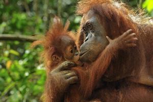 Regenwald in Borneo