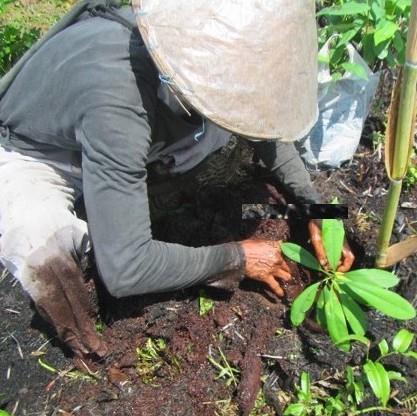 Zerstörte Torfmoorböden wieder aufforsten