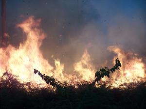 Der Regenwald brennt unkontrolliert