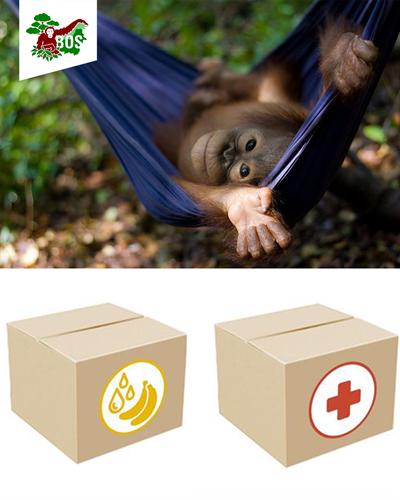 Zu den Hilfspaketen für Orang-Utans