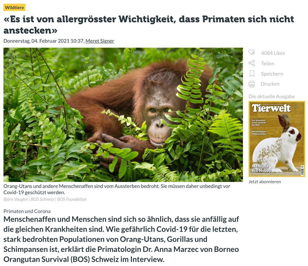 Teaser Artikel Tierwelt