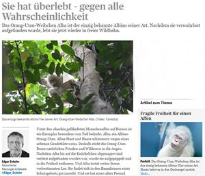Artikel im Tages-Anzeiger zu Albino-Orang-Utan Alba