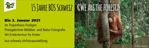 Banner zur Fotoausstellung «We are the forest»