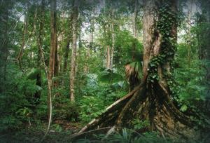 Regenwaldschutz - Mawas Regenwald