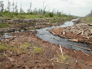 Regenwald in Gefahr - Abholzung