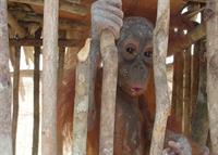 Regenwald in Gefahr - Wilderei und illegaller Handel