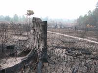 Regenwald in Gefahr - Brandrodung