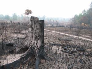 Regenwald in Gefahr - Abholzung und Brandrodung