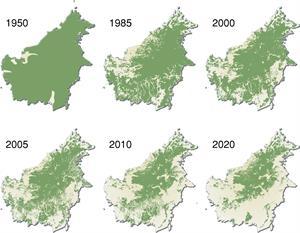 Regenwald in Gefahr