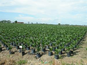 Regenwald in Gefahr - Palmöl