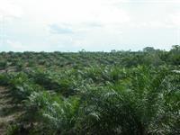 Regenwald in Gerfahr - Waldfragmentierung