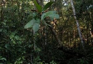 Regenwaldschutz