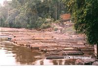 Regenwald in Gefahr - Tropenholz