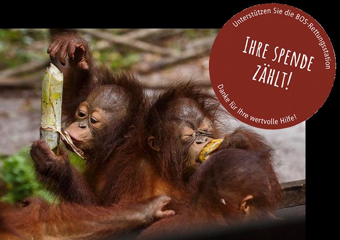 Aufruf aus Indonesien - wir brauchen Ihre Hilfe