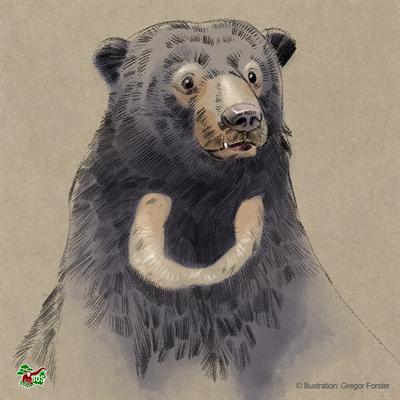 Malaienbären-Motiv, gestaltet von Gregor Forster