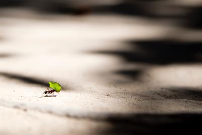 Die Termiten als Regenwald-Retter