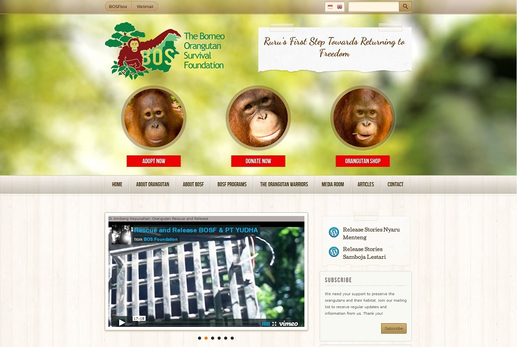 Borneo Orangutan Survivial Foundation