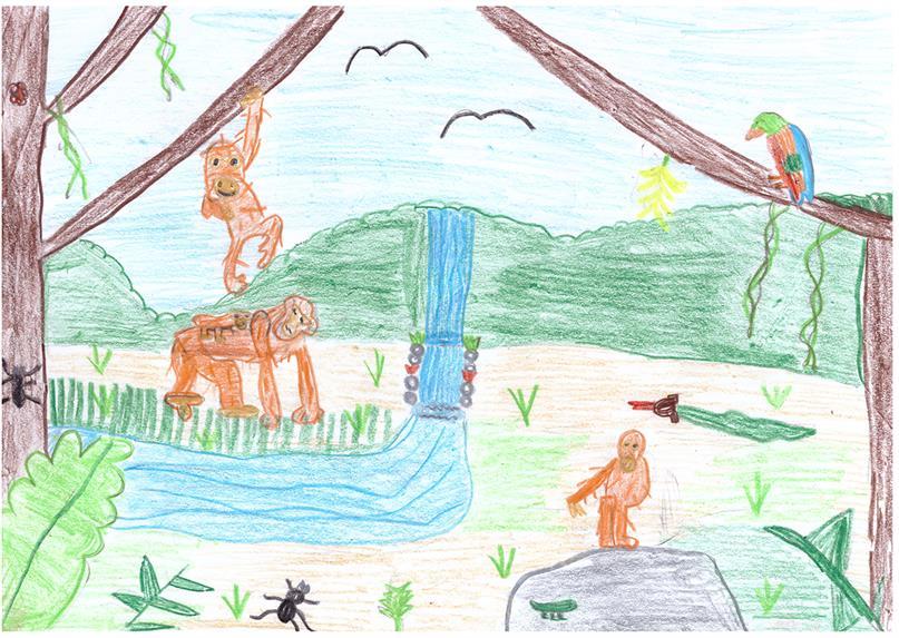 Kinderzeichnung mit Orang-Utans und anderen Tieren (von Megan, 10 Jahre alt)