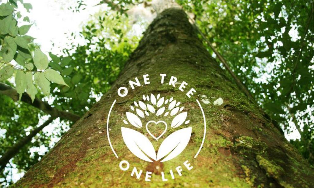 Der beste Zeitpunkt einen Baum zu pflanzen ist jetzt!