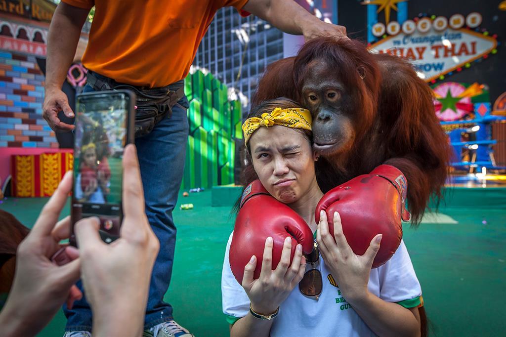 Eine Touristin knipst ein Erinnerungsfoto mit einem Orang-Utan aus einer Show